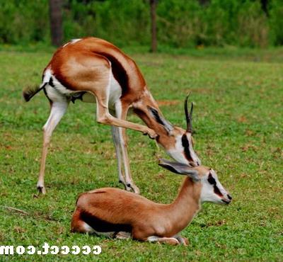 番禺野生动物园景点简介|番禺野生动物园旅游攻略|园